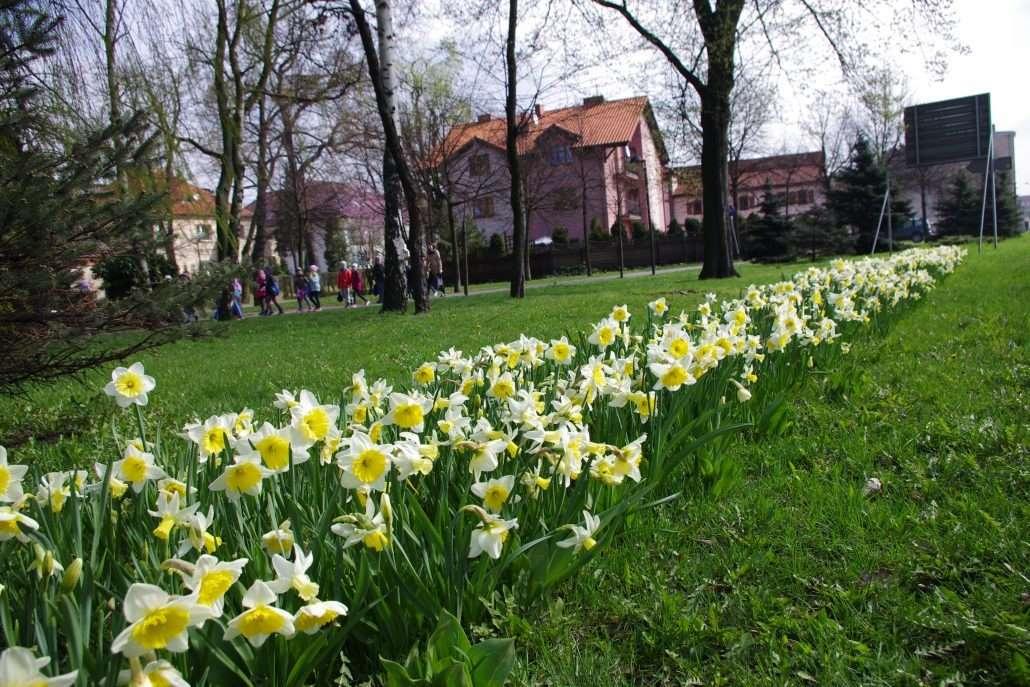 Flower-bulbs-Poland