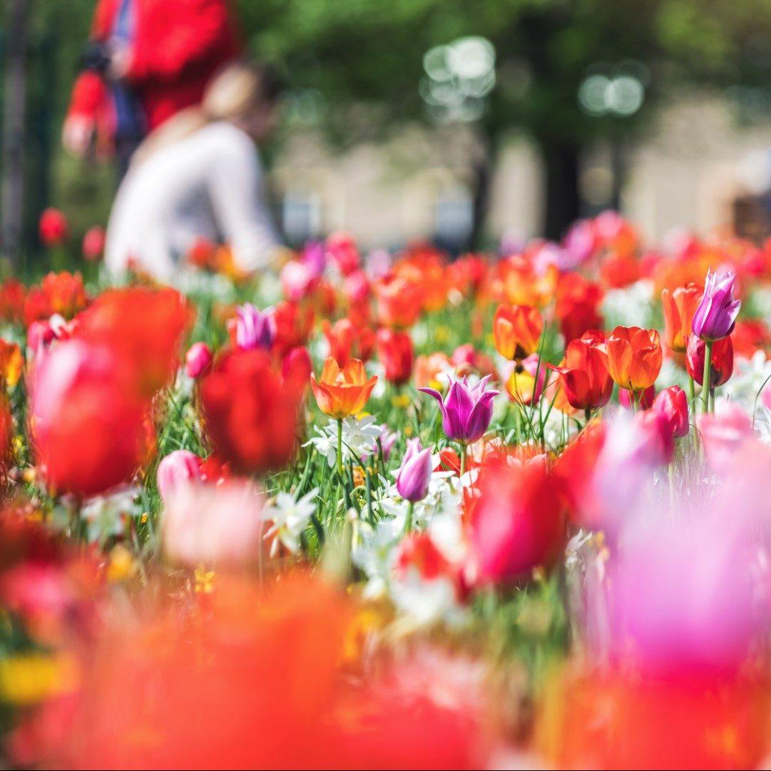 Flower-your-place-bloembollen-openbare-ruimte-avatar