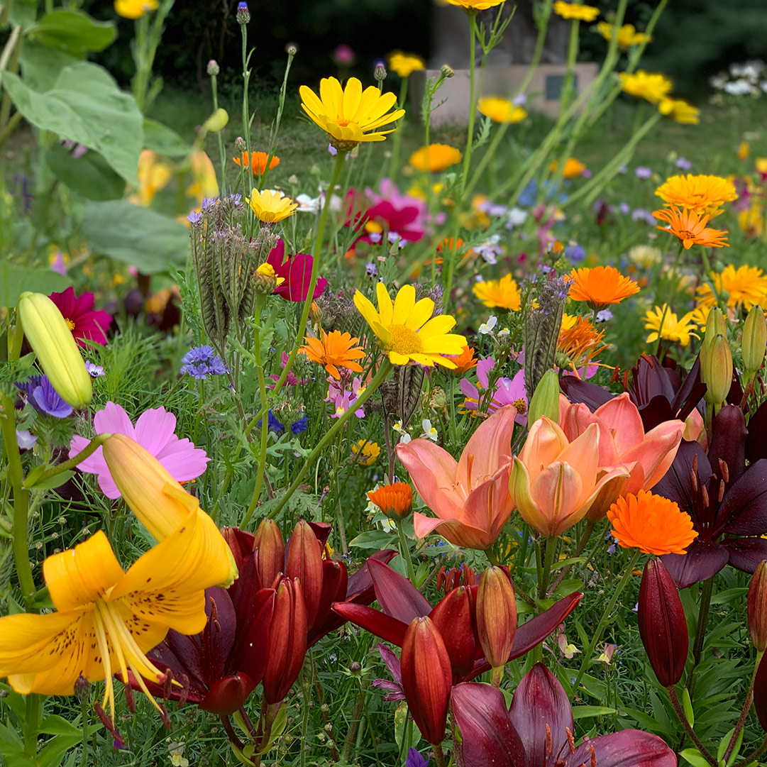 Flower-your-place---wildflowers-flowerbulbs-lillies