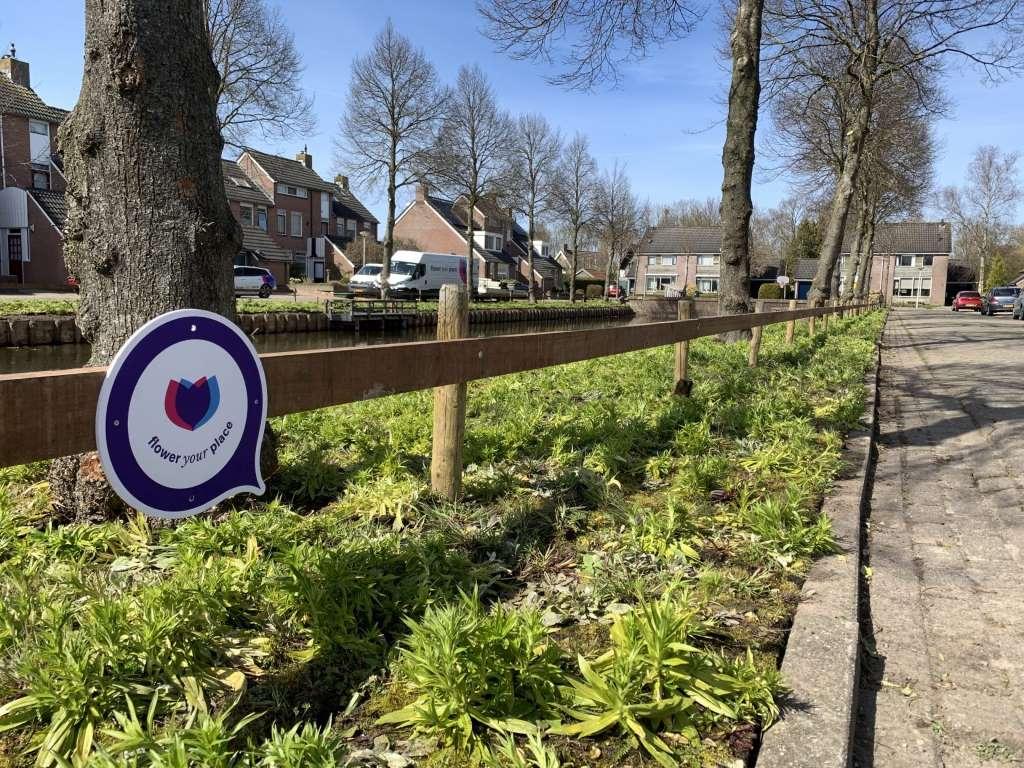 NL_Dokkum_wildflowers_matten_MG_3429