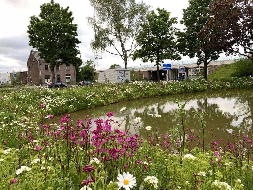 NL_Landgraaf_wildflowers_mats_3873