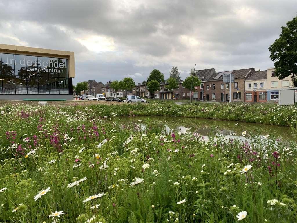 NL_Landgraaf_wildflowers_matten_IMG_3875