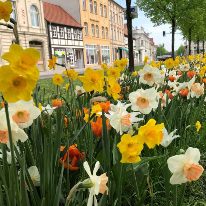 Flower-Your-Place-Martina- Narcissus- Tulipa