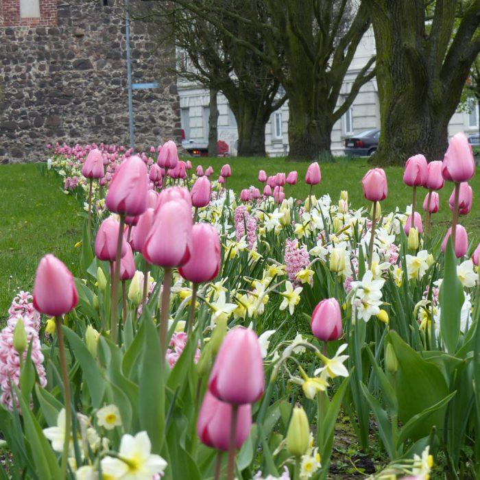 Flower-Your-Place-Rosa- Hyacinthus- Tulipa