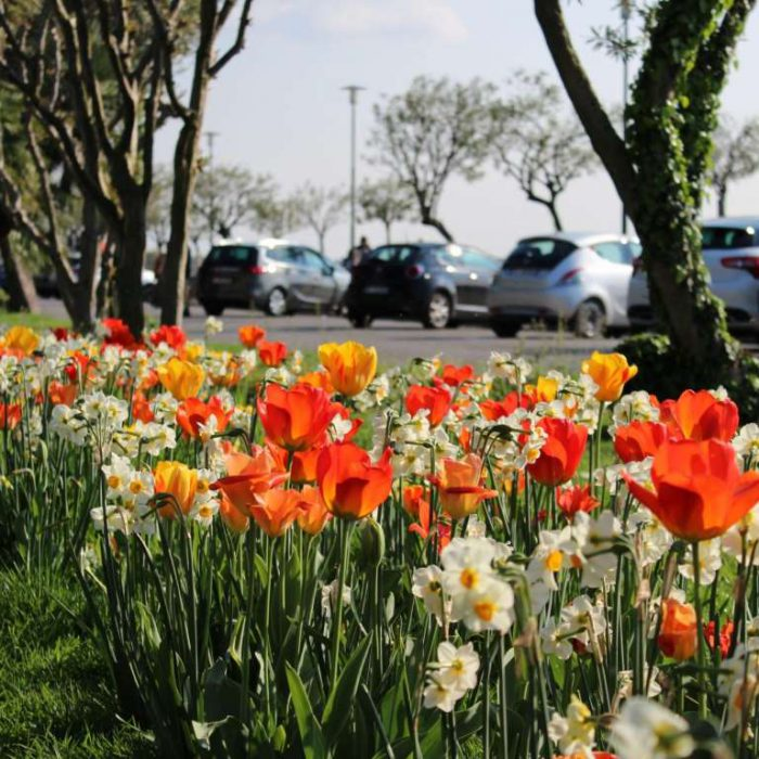 Flower-Your-Place-Sirmione- Narcissus- Tulipa