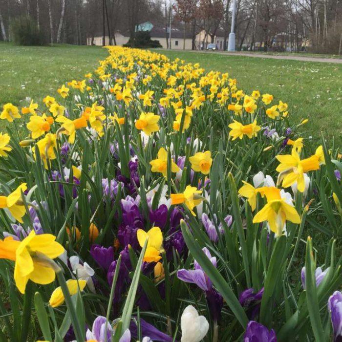 Flower-Your-Place-Wessel- Crocus- Narcissus
